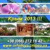 Недорогой отдых 2013 Берег Черного моря пт Орхидея