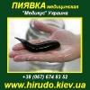 Гирудотерапия 2014 Пиявки медицинские Киев