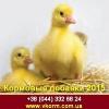 Кормовые добавки 2015 в комбикорм для животных