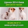 Щенки 2014 Джек рассел терьера от хозяина Киев