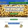 Соевый жмых 2015 Шрот макуха от 1 т Масло соевое