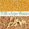Урожай 2018 Покупаем кукурузу,  влажную кукурудзу