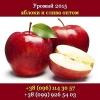 Купить яблоки урожая 2015 Опт,  свежие Украина